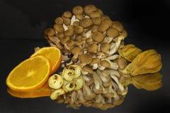 Colorful citrus Stock Photos