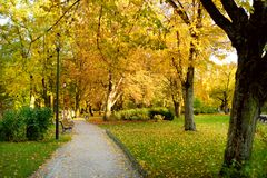 Colorful city park scene in the fall with orange and yellow foliage. Autumn scenery in Vilnius, Lithuania. Colorful city park scene in the fall with orange and stock photography