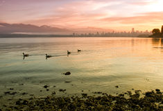 Colorful City Skyline With Geese Swimming Royalty Free Stock Photo