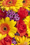 Colorful Close-up Of Lush Spring Flowers Royalty Free Stock Photography