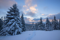 Colorful clouds float over  snow covered pine trees and hills Royalty Free Stock Photography