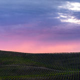 Colorful clouds over rows of Napa California vineyards at sunset Stock Photos