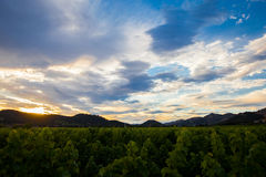 Colorful clouds at sunset over a Napa Valley vineyard Royalty Free Stock Image