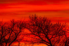 Colorful Clouds and Trees Stock Images