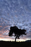 Colorful cloudscape at sunset with a tree silhouette Stock Photo