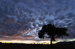 Colorful cloudscape at sunset with a tree silhouette Royalty Free Stock Photography