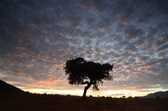Colorful cloudscape at sunset with a tree silhouette Stock Photos