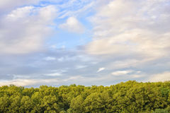 Colorful cloudy sky with green trees Stock Images