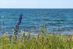 Colorful coastline closeup Stock Photography