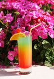 Colorful cocktail and pink flowers. Royalty Free Stock Image