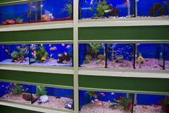 Colorful cold water and tropical fish aquariums stock photography