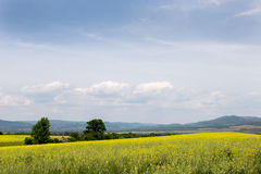 Colorful coleseed fields landscape Royalty Free Stock Images