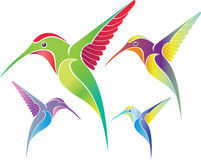 Colorful colibri. Colibri bird in different color variations Stock Photos