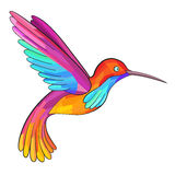 Colorful Colibri. Hummingbird. Great for company Logo. Stock Photography