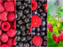 Colorful collage of different fruits and berries. For a food background. Photo of mixed various kinds of berries stock images