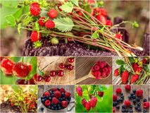 Colorful collage of different fruits and berries. For a food background. Photo of mixed various kinds of berries stock photography