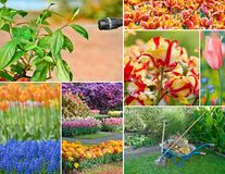 Colorful collage of flowers royalty free stock photo