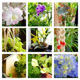 Tropical gardens decor collage Stock Photo