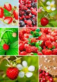 Colorful collage strawberry Royalty Free Stock Image