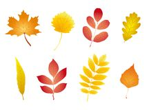 COLORFUL AND NICE AUTUMN LEAVES SET. Colorful collection of maple, acacia, mountain ash, oak, poplar, walnut, willow and birch leaves royalty free illustration