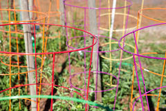 Free Colorful Collection Of Tomato Cages Stock Photography - 73360832