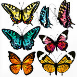 Colorful Collection Of Vector Realistic Butterflies For Design Royalty Free Stock Image