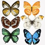 Colorful Collection Of Vector Realistic Butterflies For Design Stock Photo