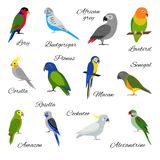 Colorful set of parrot icons Stock Image