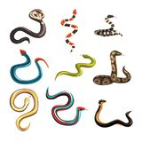 Colorful collection of various snakes Royalty Free Stock Images
