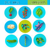 Colorful Collection Vegetable Icon Set Royalty Free Stock Photography