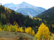 Colorful Colorado. Aspen and pine forest at high elevation in the Rocky Mountains royalty free stock photos