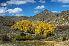 Colorful Colorado. Autumn colors in colorful Colorado Stock Photography
