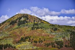 Colorful Colorado in Fall Aspen Trees On the Mountain. Stunning colors on the side of a mountain in Colorado in the fall. Green leaves mixed with bright yellow royalty free stock photo