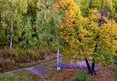 Colorful colored trees in the autumn park stock photos