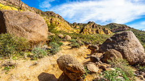 Colorful Colorful Yellow and Orange Geological Layers of Usery Mountain surrounded by Large Boulders, Saguaro and other Cacti Royalty Free Stock Photography