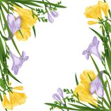 Colorful composition with freesia flowers and buds. Frame or border on white background. Digital illustration. stock illustration