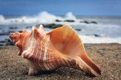 A colorful conch on the beach, Kanyakumari. A colorful conch lying on the beach at Kanyakumari. In the background is a huge wave crashing against the rocks and Royalty Free Stock Photos