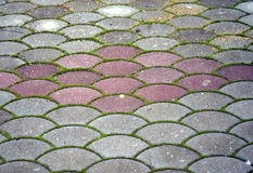 Colorful Concrete pavement with grass Royalty Free Stock Photography