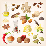 Colorful condiments and spices set. Spices, condiments and herbs decorative elements and icons. Seeds, fruit, flower buds, leaves, blends and roots of condiment Stock Photos