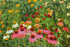 Colorful coneflowers with funny eyes. And with some colorful flowers in background Royalty Free Stock Photography