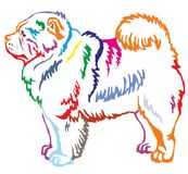 Colorful decorative standing portrait of Chow Chow. Colorful contour decorative portrait of standing in profile dog Chow Chow, vector isolated illustration on Royalty Free Stock Photography