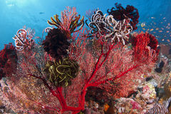 Colorful Coral Royalty Free Stock Photo