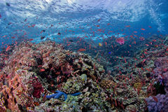 Colorful coral. In blue water Stock Photo