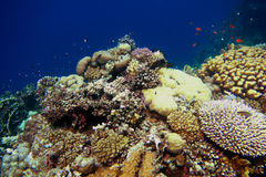 colorful coral in egypt holidays Stock Photo