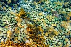 Colorful coral garden Stock Photo