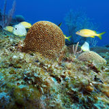 Colorful Coral Landscape of Caribbean Sea Royalty Free Stock Photography