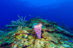 Colorful Coral Landscape of Caribbean Sea Royalty Free Stock Photos