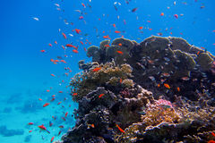 Colorful coral and many fish Stock Image