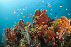 Colorful coral reef Royalty Free Stock Photography