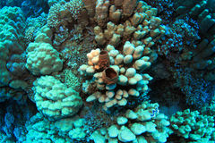 Colorful coral reef Stock Photography